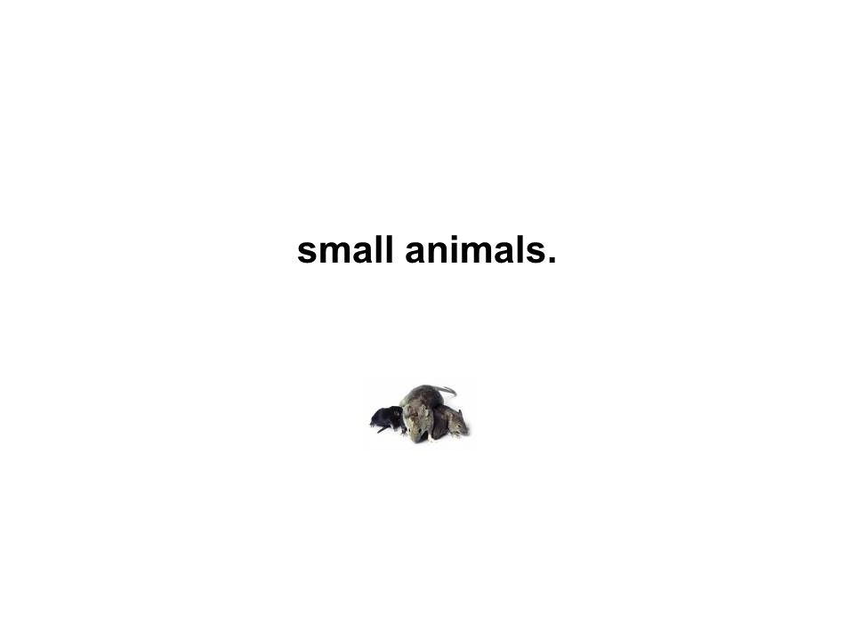 small animals.