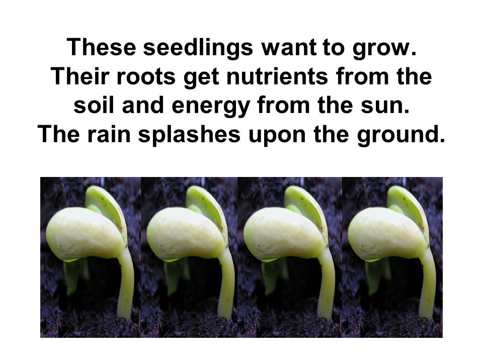 These seedlings want to grow