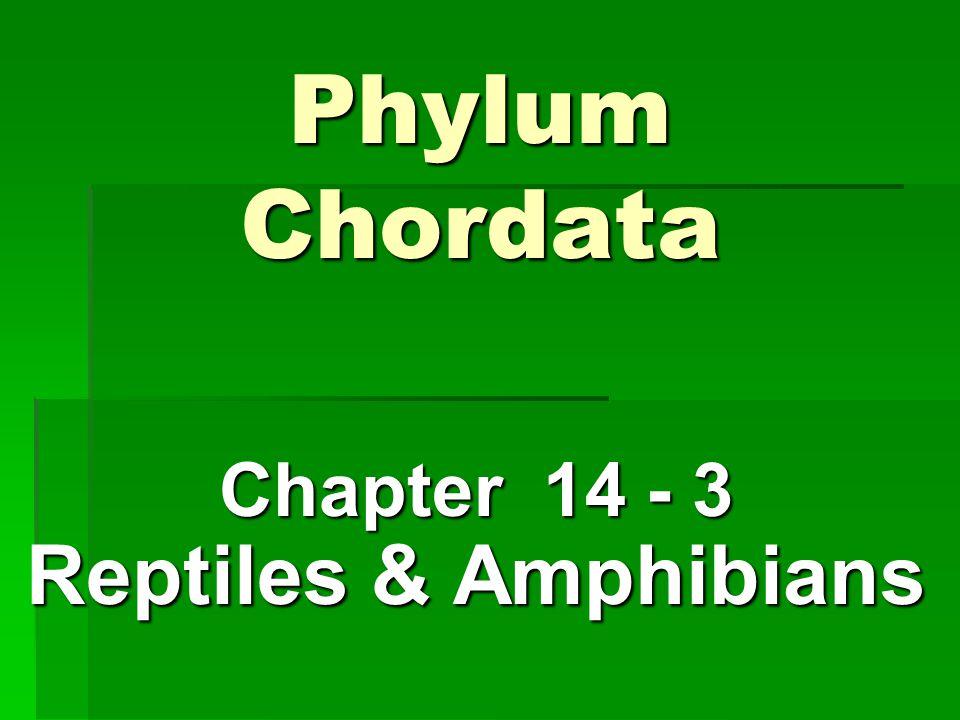 Chapter 14 - 3 Reptiles & Amphibians