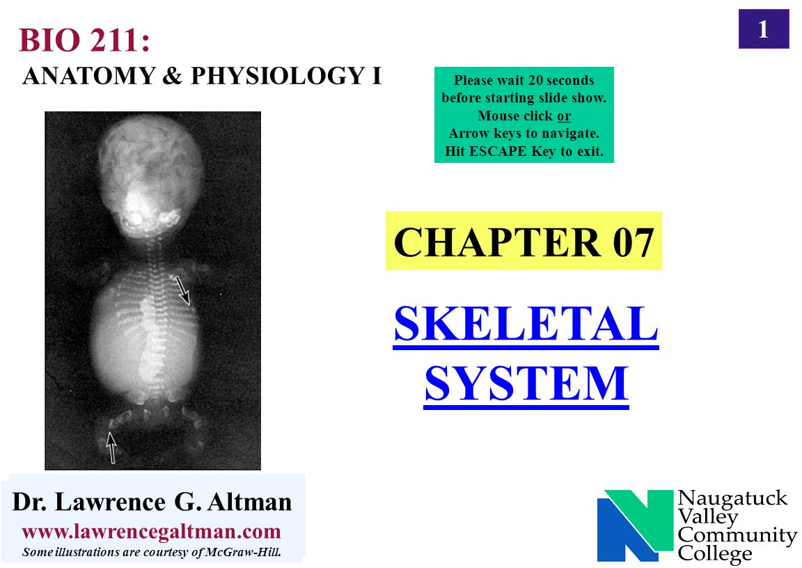 SKELETAL SYSTEM CHAPTER 07 BIO 211: Dr. Lawrence G. Altman