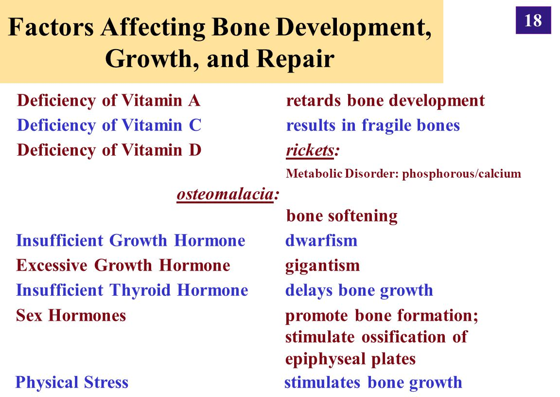 Factors Affecting Bone Development, Growth, and Repair