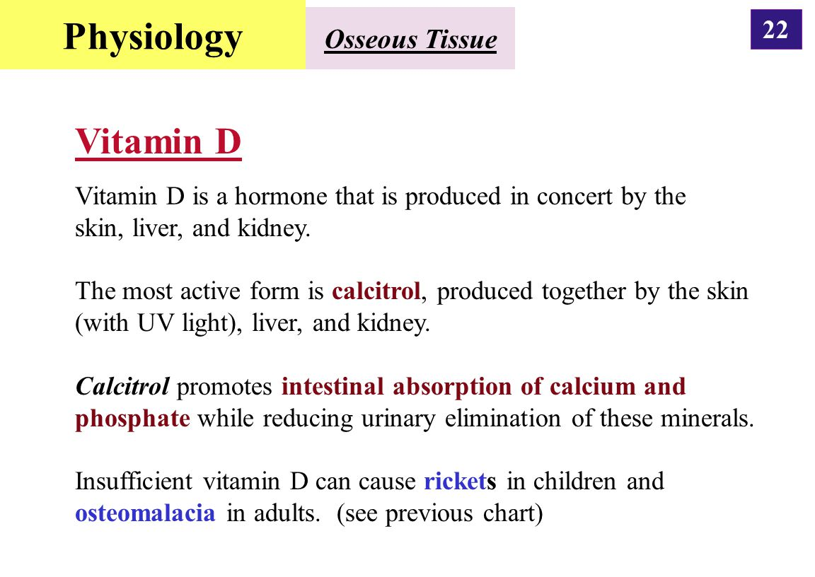 Physiology Vitamin D Osseous Tissue