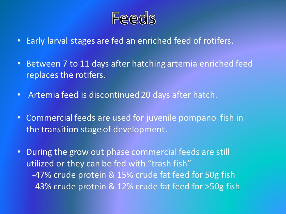 Feeds Early larval stages are fed an enriched feed of rotifers.