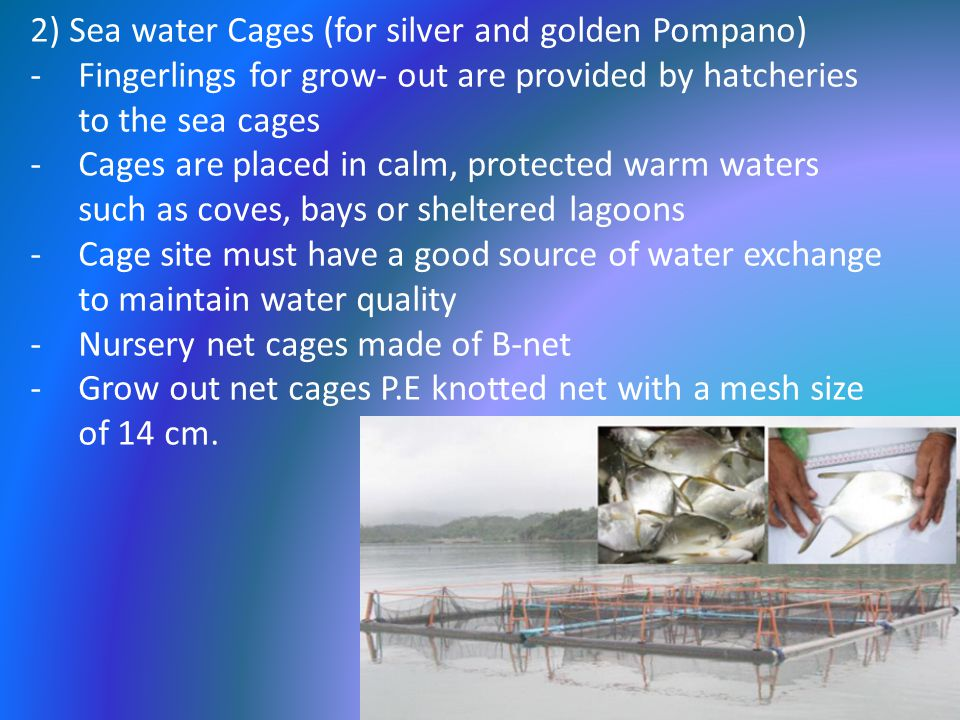 2) Sea water Cages (for silver and golden Pompano)