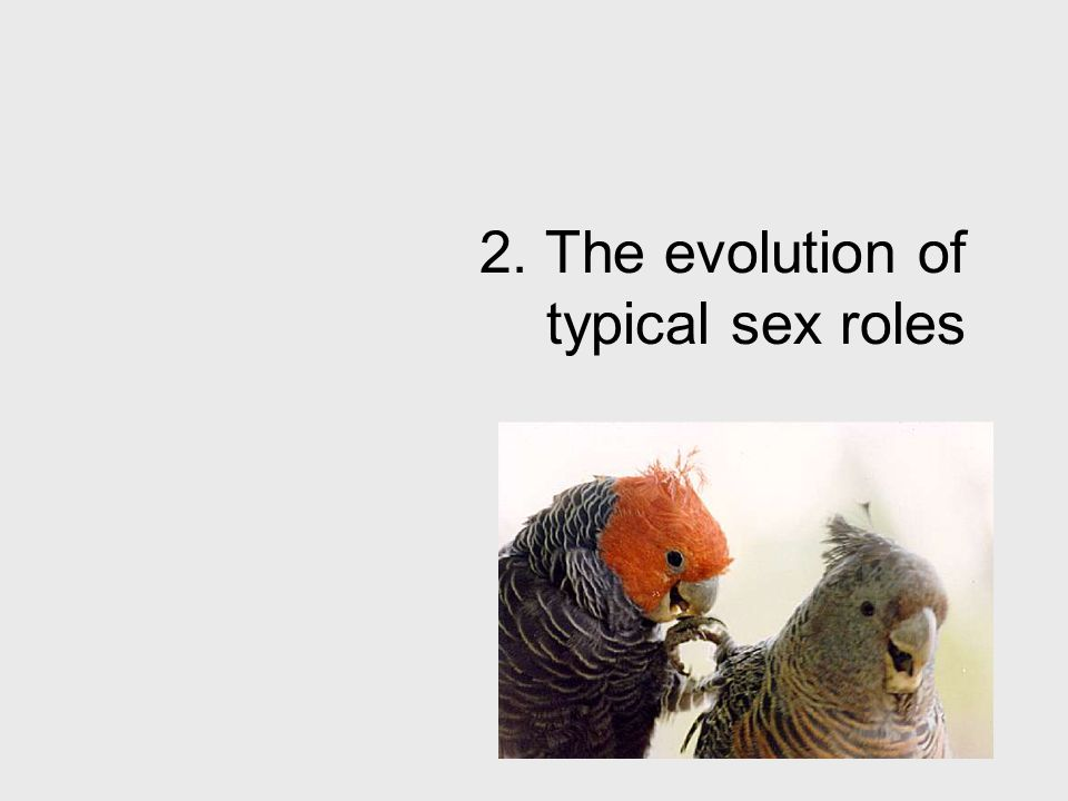 2. The evolution of typical sex roles