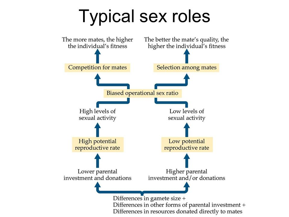 Typical sex roles