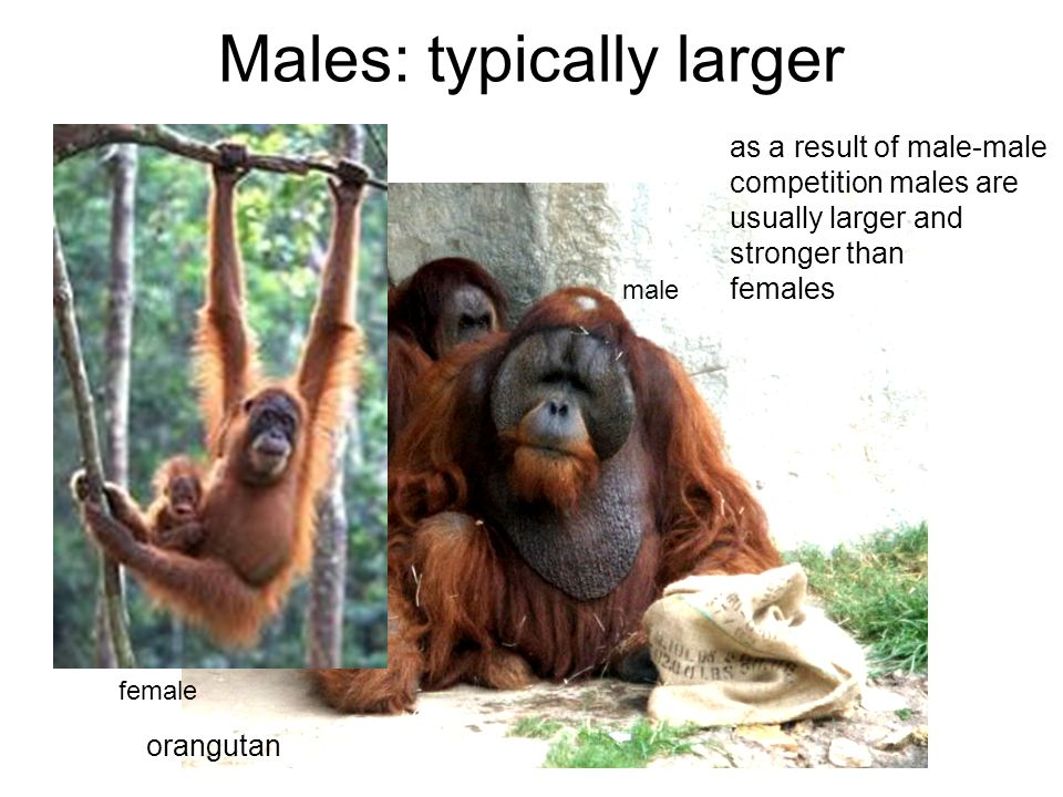 Males: typically larger