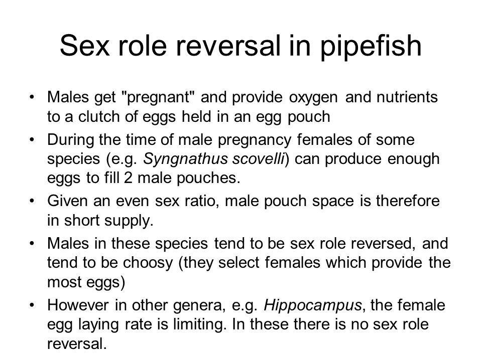 Sex role reversal in pipefish