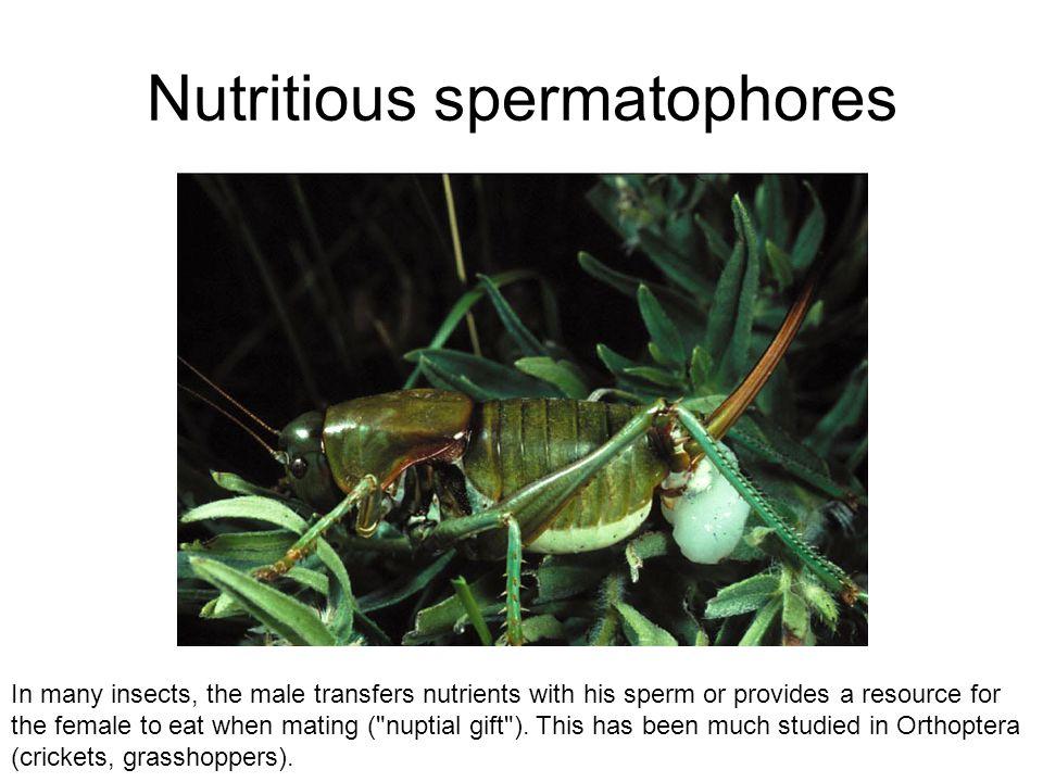 Nutritious spermatophores