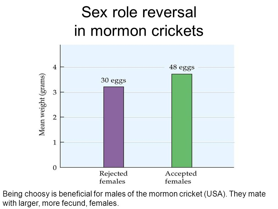 Sex role reversal in mormon crickets
