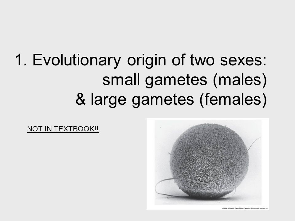 1. Evolutionary origin of two sexes: small gametes (males) & large gametes (females)