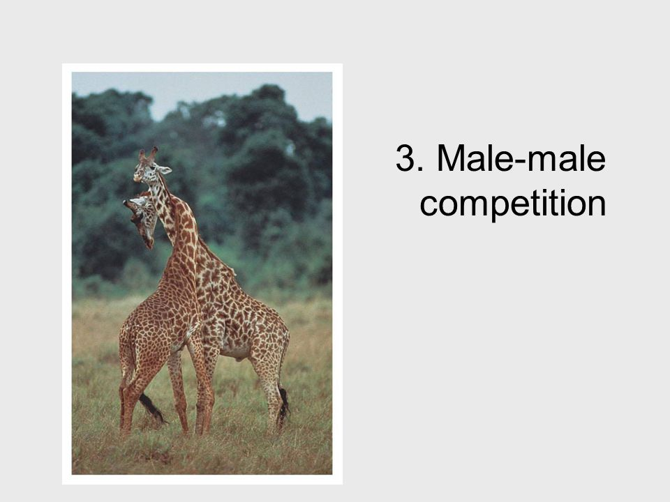 3. Male-male competition