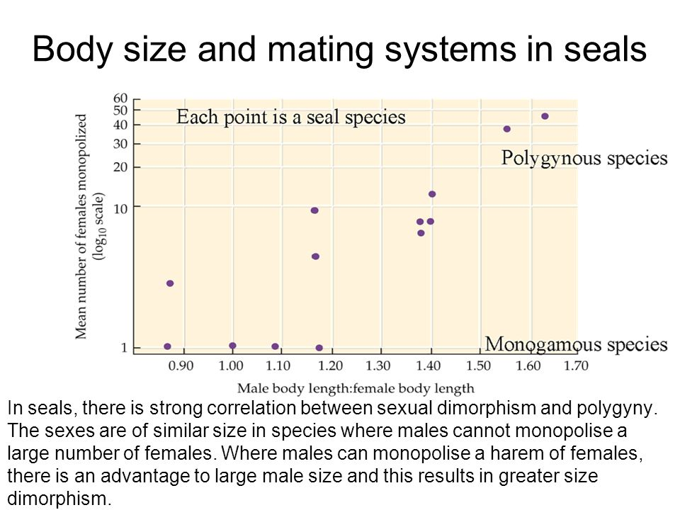 Body size and mating systems in seals