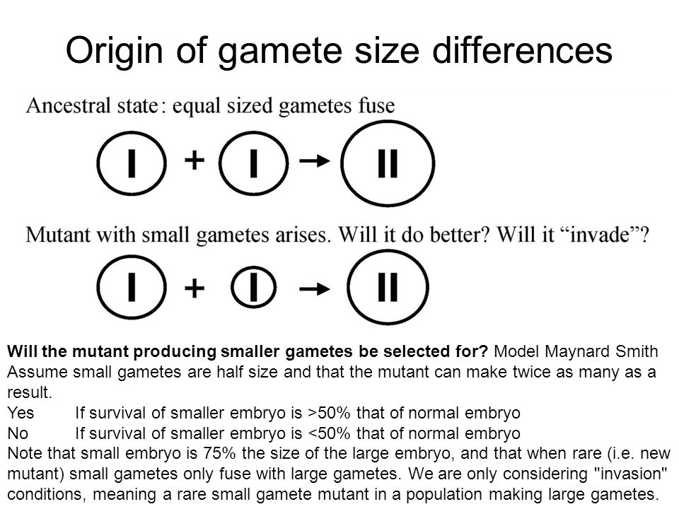 Origin of gamete size differences