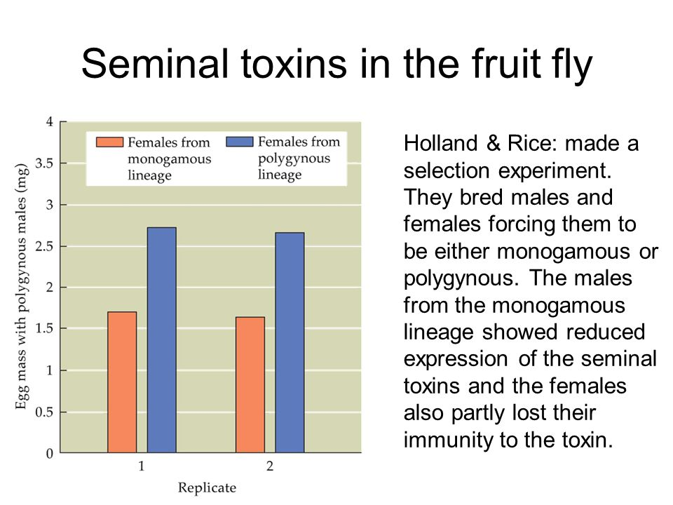Seminal toxins in the fruit fly