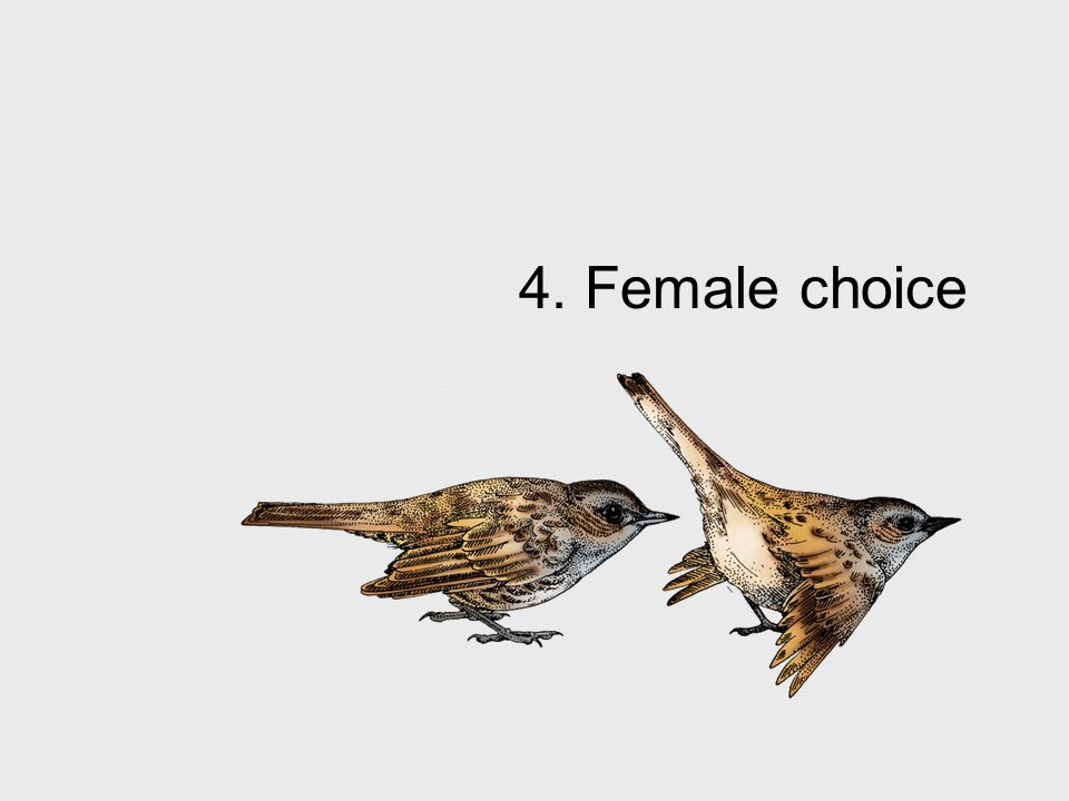 4. Female choice