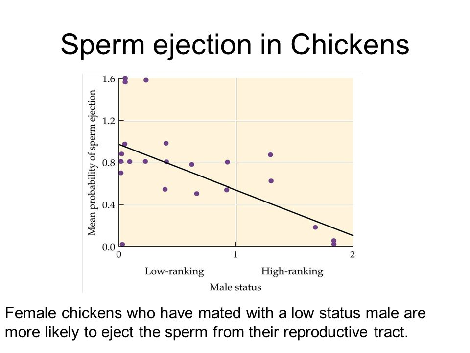 Sperm ejection in Chickens