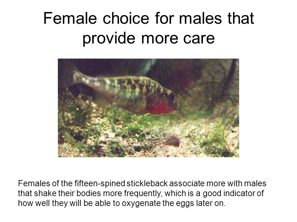 Female choice for males that provide more care