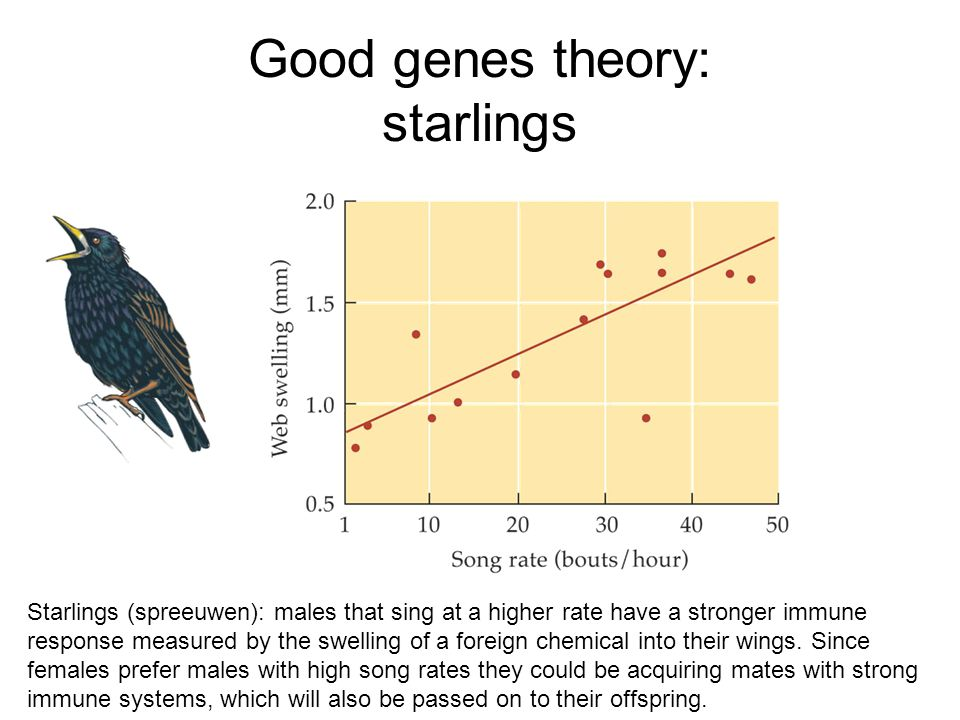 Good genes theory: starlings