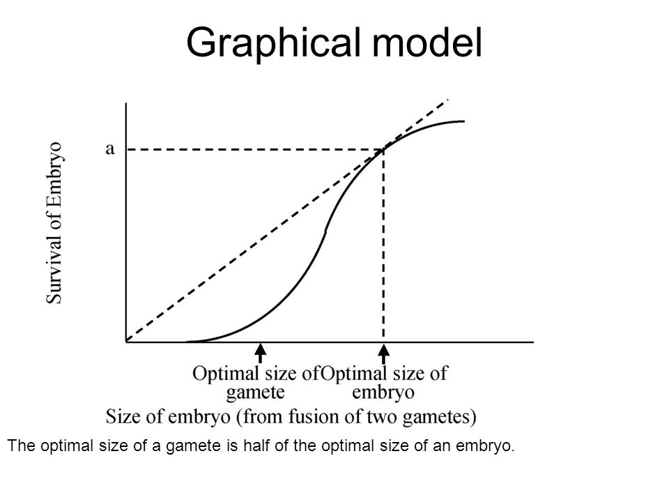 Graphical model The optimal size of a gamete is half of the optimal size of an embryo.
