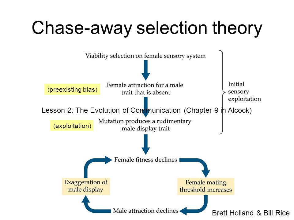 Chase-away selection theory