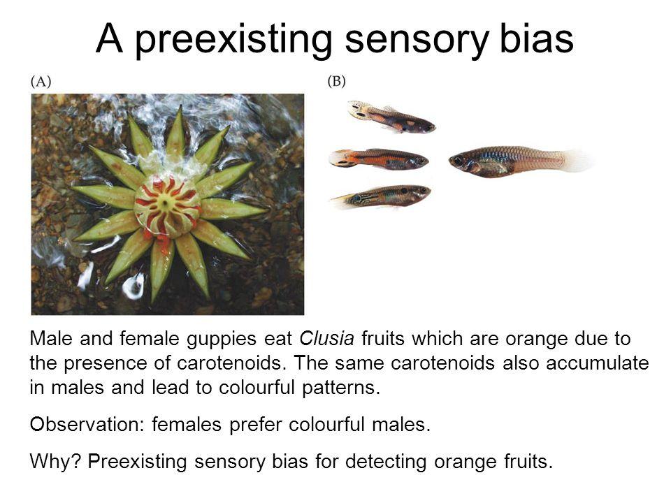 A preexisting sensory bias
