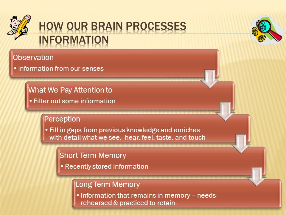 How Our Brain Processes Information
