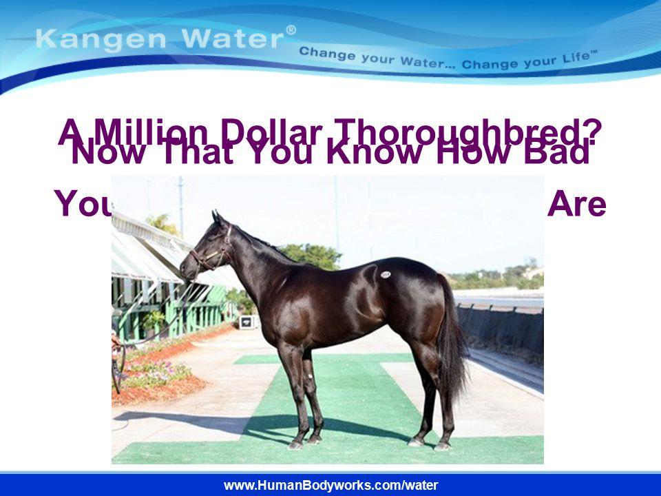A Million Dollar Thoroughbred