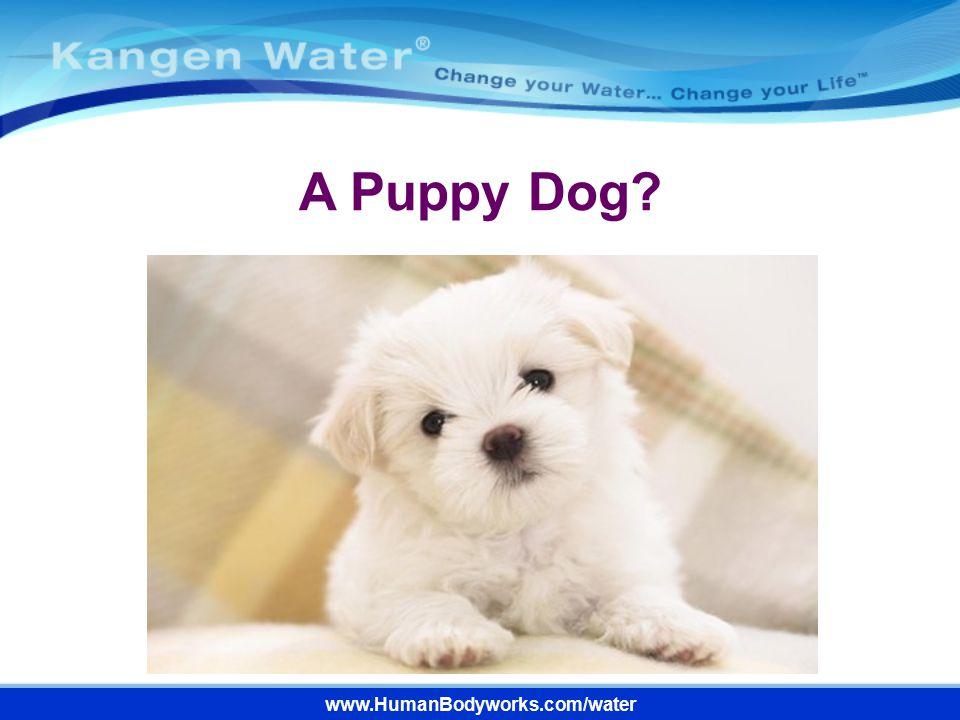 A Puppy Dog www.HumanBodyworks.com/water