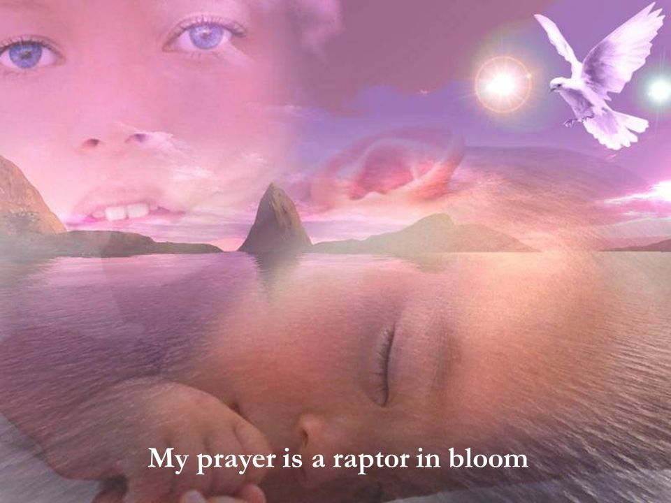 My prayer is a rapture in bloom My prayer is a raptor in bloom