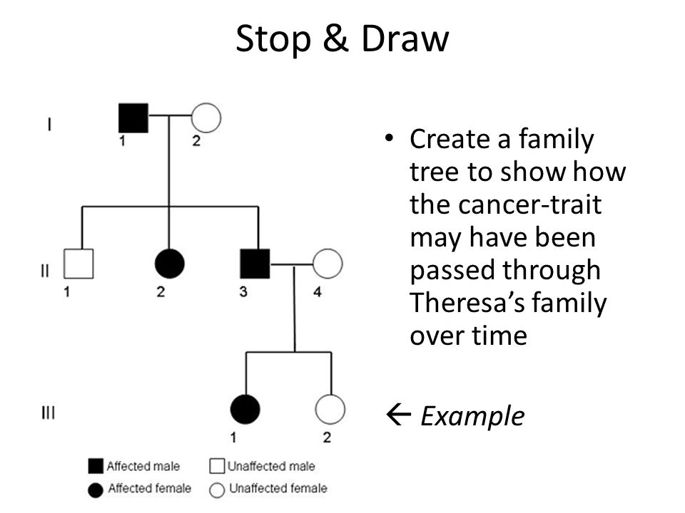 Stop & Draw Create a family tree to show how the cancer-trait may have been passed through Theresa's family over time.