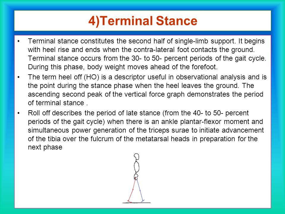 4)Terminal Stance