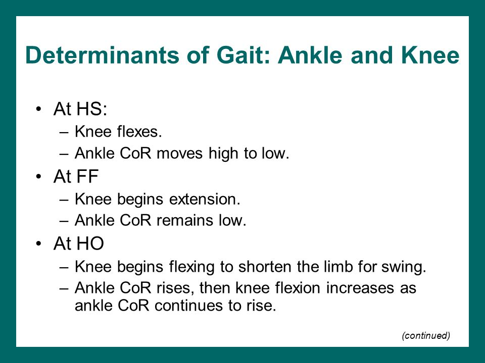 Determinants of Gait: Ankle and Knee