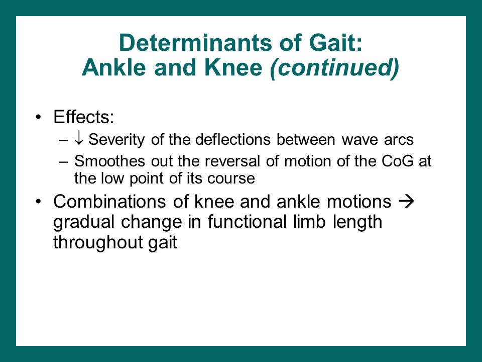 Determinants of Gait: Ankle and Knee (continued)