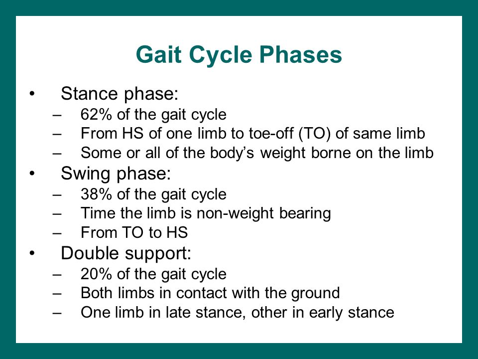 Gait Cycle Phases Stance phase: Swing phase: Double support: