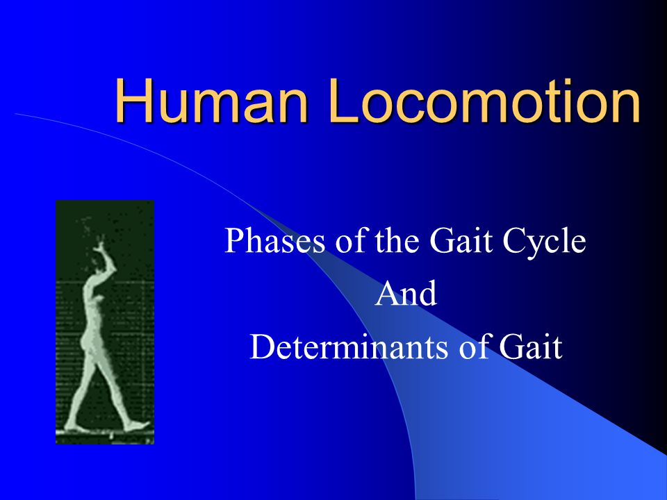Phases of the Gait Cycle And Determinants of Gait