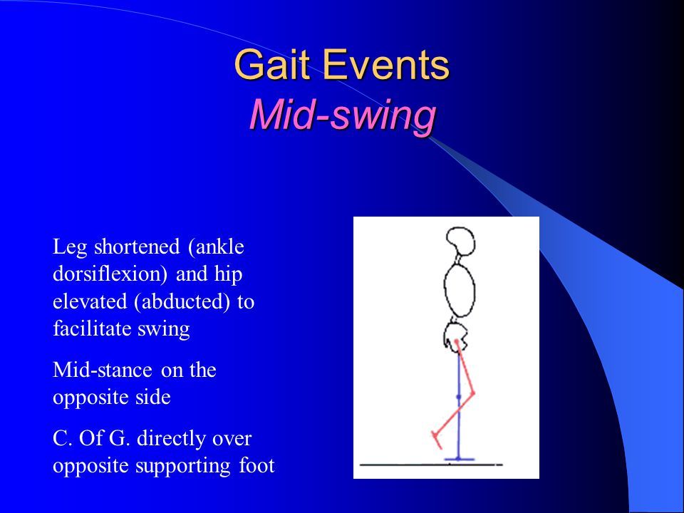 Gait Events Mid-swing Leg shortened (ankle dorsiflexion) and hip elevated (abducted) to facilitate swing.
