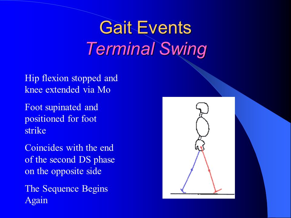 Gait Events Terminal Swing