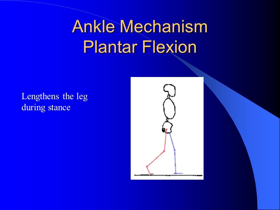 Ankle Mechanism Plantar Flexion