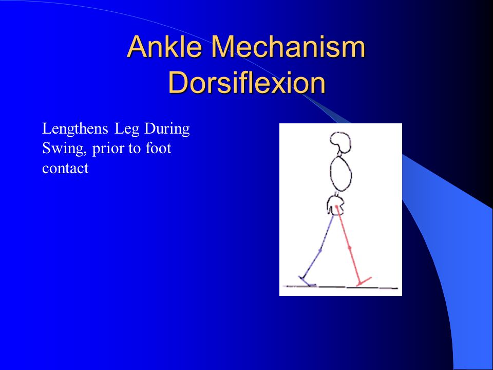 Ankle Mechanism Dorsiflexion