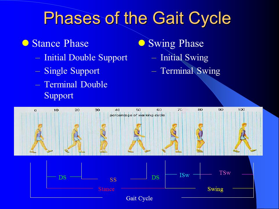 Phases of the gait cycle and determinants ppt