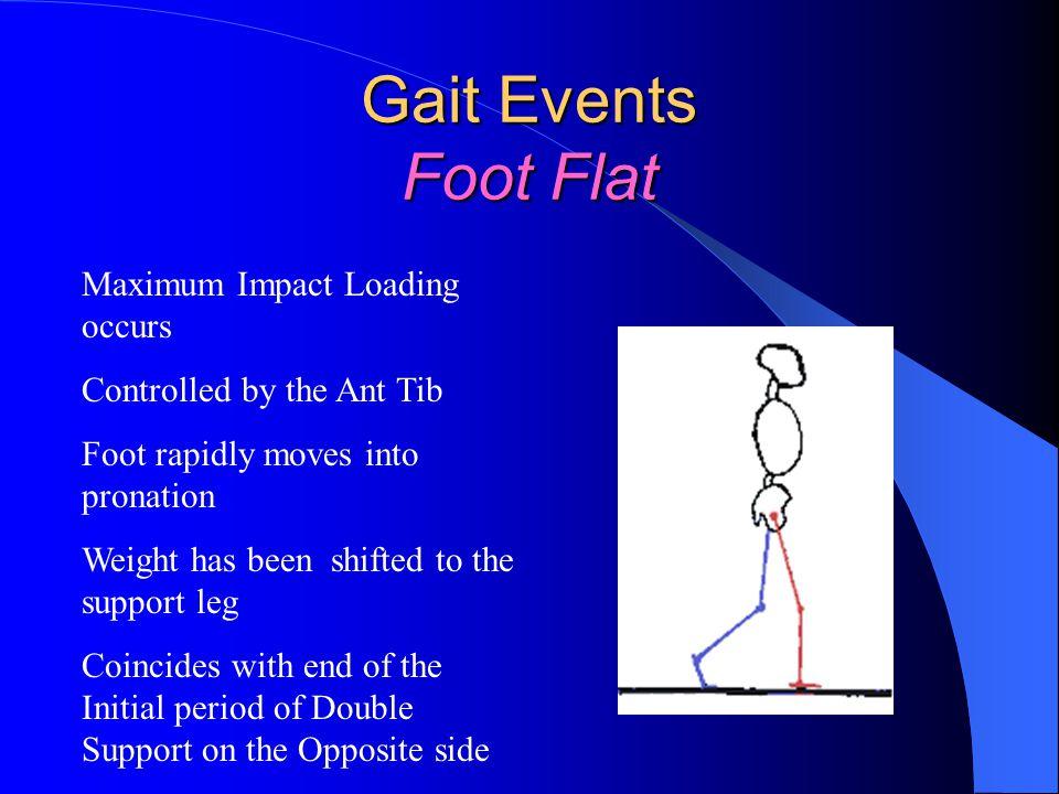 Gait Events Foot Flat Maximum Impact Loading occurs
