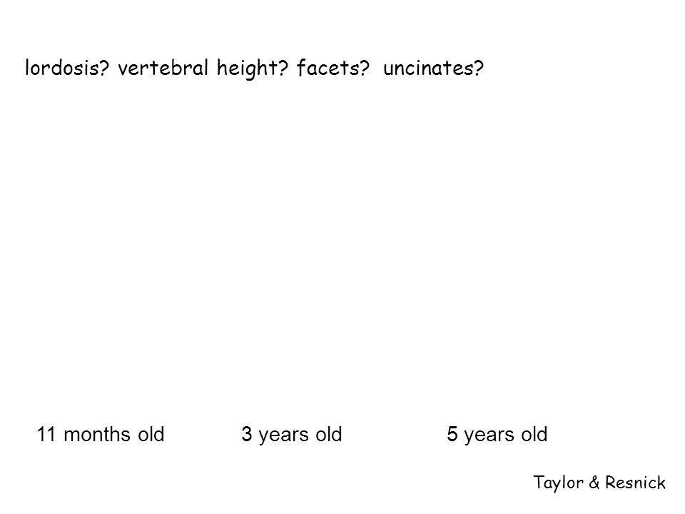 lordosis vertebral height facets uncinates