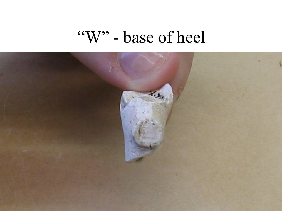 W - base of heel