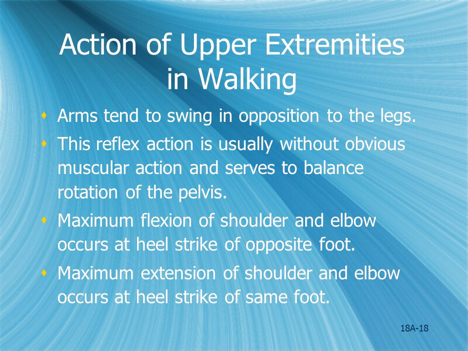 Action of Upper Extremities in Walking