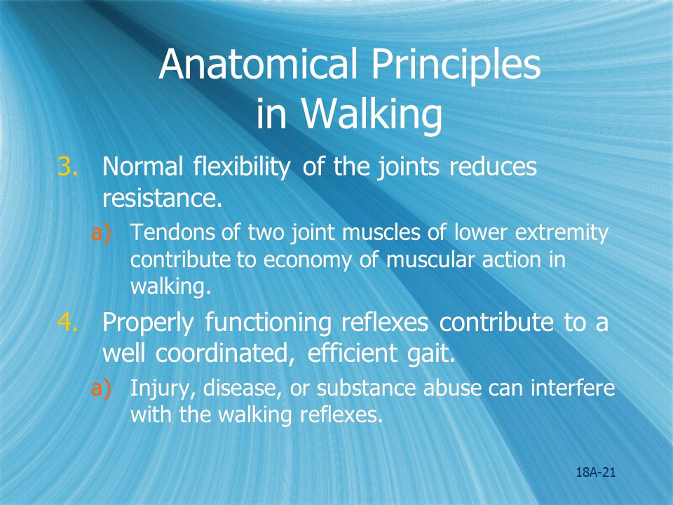 Anatomical Principles in Walking