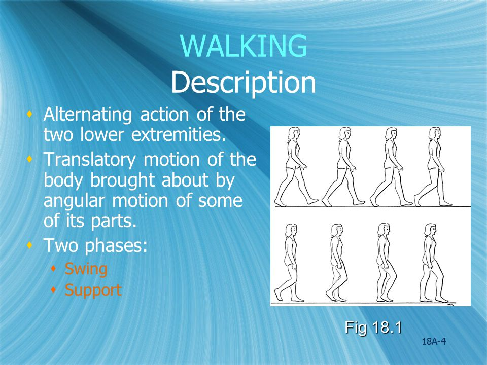 WALKING Description Alternating action of the two lower extremities.