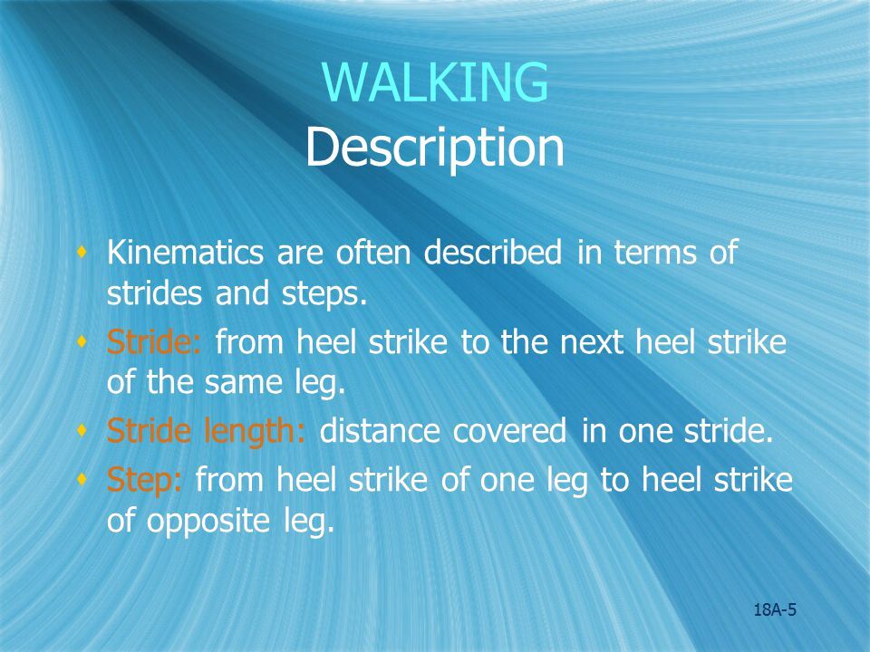 WALKING Description Kinematics are often described in terms of strides and steps. Stride: from heel strike to the next heel strike of the same leg.