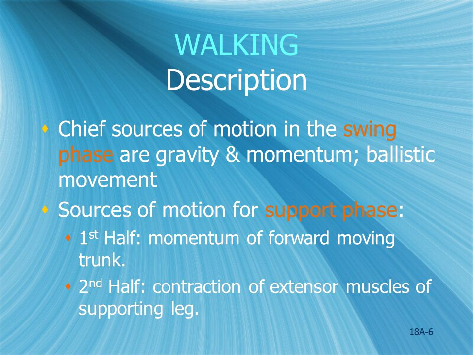 WALKING Description Chief sources of motion in the swing phase are gravity & momentum; ballistic movement.