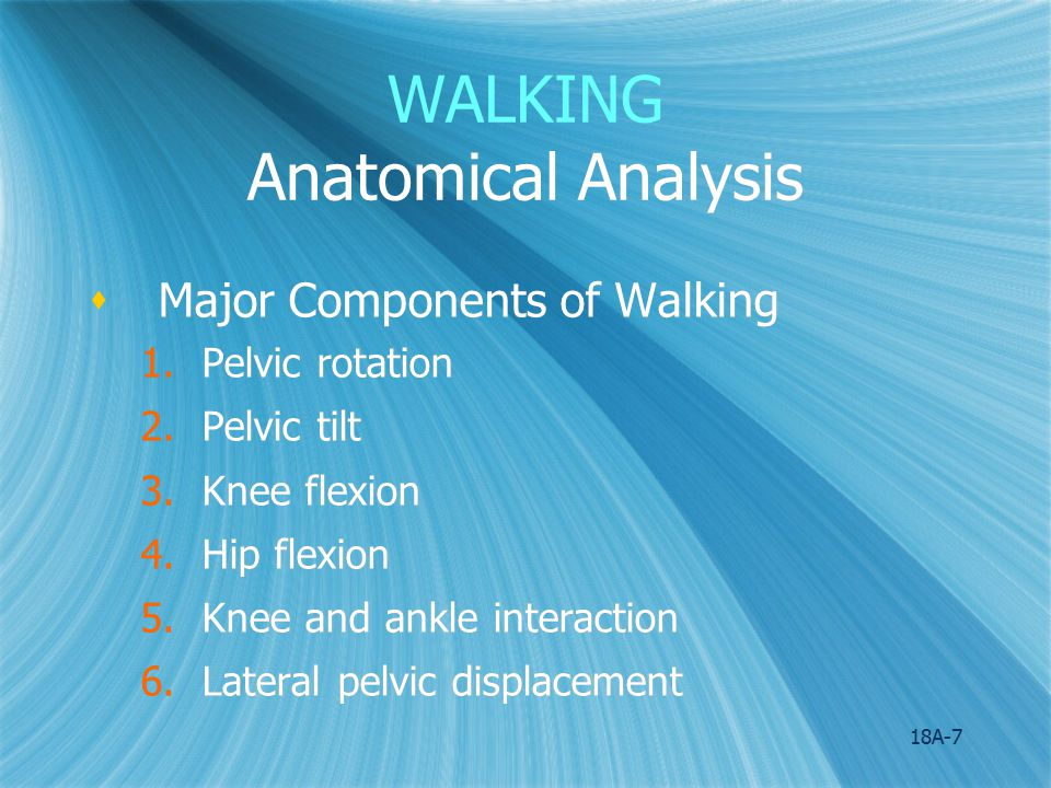 WALKING Anatomical Analysis